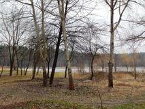Предыдущая прогулка весны в парке вдоль берега озера Стоковое Изображение