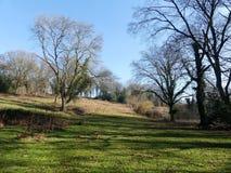 Предыдущая сцена весны на общем Chorleywood, Хартфордшире, Великобритании стоковое изображение