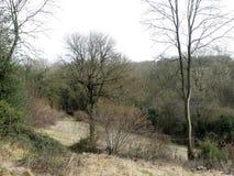 Предыдущая сцена весны, общее Chorleywood стоковые изображения rf