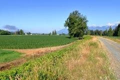 Предыдущее канадское кукурузное поле западного побережья весной Стоковые Фото