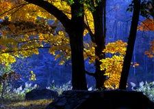 предыдущее светлое утро стоковое фото rf