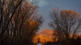 Предыдущее Солнце светя на Treetops стоковые изображения rf