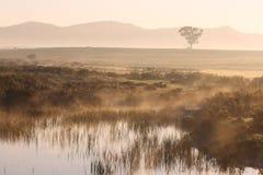 предыдущее утро ландшафта Стоковые Изображения RF
