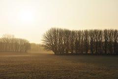 предыдущее утро ландшафта Стоковая Фотография