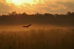 предыдущее утро полета Стоковые Изображения RF