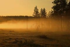 предыдущее утро тумана Стоковые Изображения