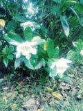Предыдущее цветение стоковое изображение