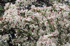 Предыдущие заводы весны в ботаническом саде, Загребе, Хорватии, 14 Стоковое Фото