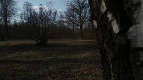 Предыдущий весенний день в белорусском лесе, видео- переход от позади  видеоматериал