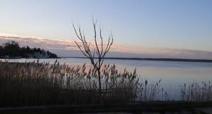 Предыдущий восход солнца на реке Mullica стоковая фотография rf