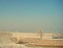 предыдущий заморозок Стоковые Изображения