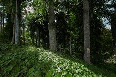 Предыдущий ландшафт леса горы осени панорама горы ландшафта caucasus северная Стоковые Фото