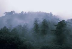 предыдущий туман Стоковые Фото
