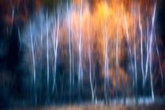 Прекрасные древесины в осени стоковое изображение