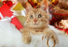 Прекрасный котенок лежа в корзине стоковая фотография