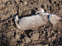 Прекрасный котенок лежа на том основании и мурлыкая стоковая фотография rf