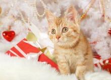 Прекрасный котенок лежа под рождественской елкой стоковая фотография