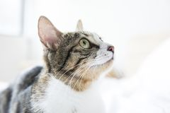 Прекрасный кот на кровати стоковое изображение rf