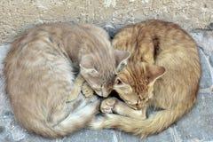 2 прекрасных кота черпая ложкой друг с другом стоковая фотография rf
