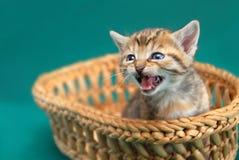 прелестная киска корзины Стоковое Фото