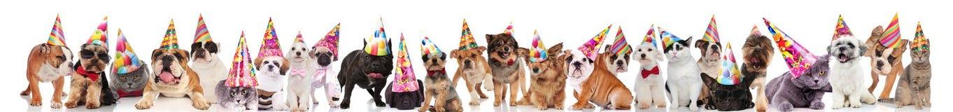 Прелестная команда много любимчиков партии с крышками дня рождения стоковые изображения rf