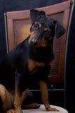 прелестная любознательная собака очень Стоковая Фотография