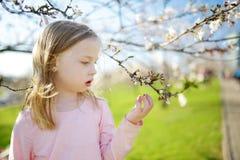 Прелестная маленькая девочка в зацветая саде яблони на красивый весенний день стоковое изображение rf