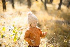 Прелестная маленькая девочка открывая природу на лесе осени, солнечный день Стоковые Фотографии RF