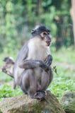 Прелестная маленькая обезьяна Стоковая Фотография RF