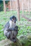 Прелестная маленькая обезьяна Стоковое Изображение