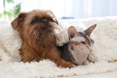 Прелестная собака и кошка совместно под одеялом на софе дома стоковые фото