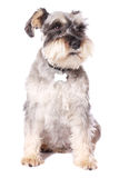 прелестная собака немногая Стоковое Изображение RF