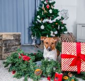 Прелестная собака рождества стоковые фотографии rf