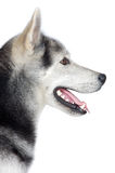 прелестная собака Стоковое Фото