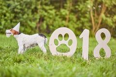 Прелестная счастливая собака терьера лисы на парке greetin 2018 Новых Годов Стоковое Изображение