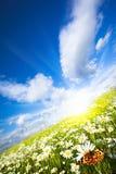 прелестно лето Стоковые Фото