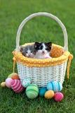 Прелестные котята в корзине пасхи праздника стоковое изображение