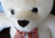 Прелестный заполненный медведь Стоковая Фотография RF