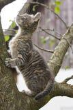 Прелестный котенок взбираясь на дереве Стоковые Фотографии RF