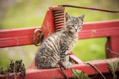 Прелестный котенок на ферме Стоковые Изображения