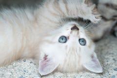 прелестный котенок немногая Стоковые Изображения