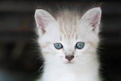прелестный котенок немногая Стоковое Фото