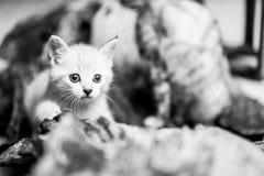 прелестный котенок немногая Стоковое Изображение RF