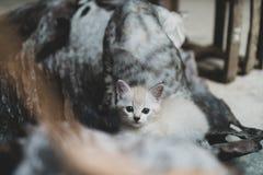 прелестный котенок немногая Стоковая Фотография