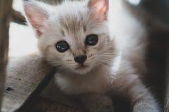 прелестный котенок немногая Стоковая Фотография RF