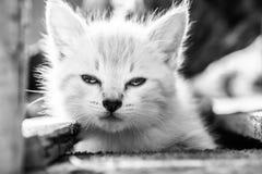 прелестный котенок немногая Стоковые Фотографии RF