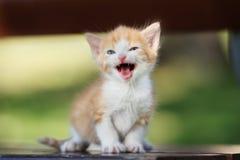 Прелестный котенок представляя на стенде Стоковые Изображения RF