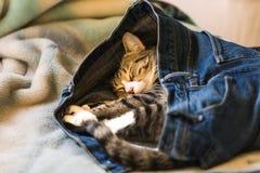 Прелестный котенок спать в кто-то голубые джинсы на кровати Стоковые Изображения