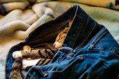 Прелестный котенок спать в кто-то голубые джинсы на кровати Стоковая Фотография