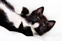 прелестный котенок Стоковая Фотография